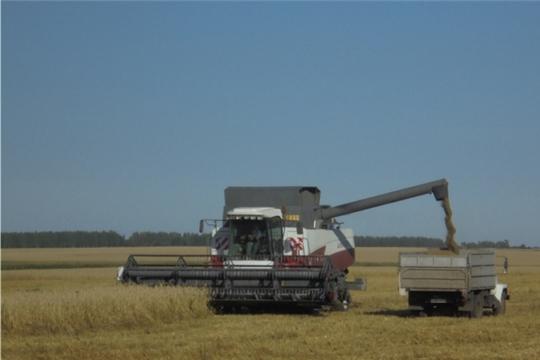 В СХПК имени Карла Маркса полным ходом идет уборка зерновых культур