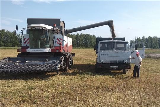 Хозяйства Яльчикского района приступили к обмолоту зерновых культур