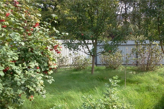 Управление Росреестра не решает земельные споры между соседями