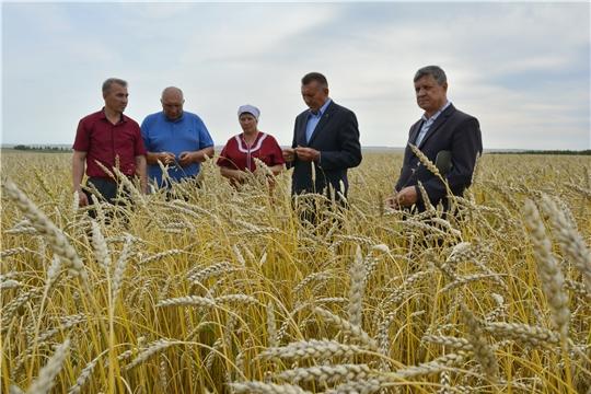 Глава администрации Яльчикского района Николай Миллин ознакомился с ходом сезонных полевых работ в хозяйствах
