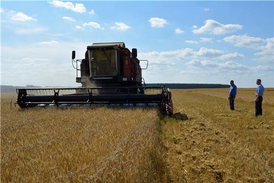 Яльчикский район: уборка урожая в разгаре