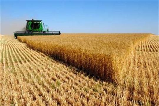 В хозяйствах республики завершается уборка зерновых и зернобобовых культур