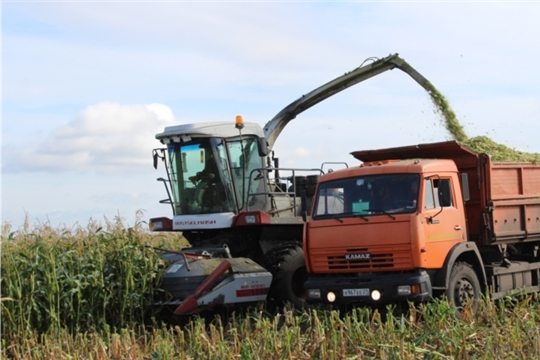 В СХПК «Комбайн» идёт активная уборка кукурузы на силос