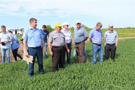 Осмотр полей в Цивильском районе выявил лучшие сельхозпредприятия