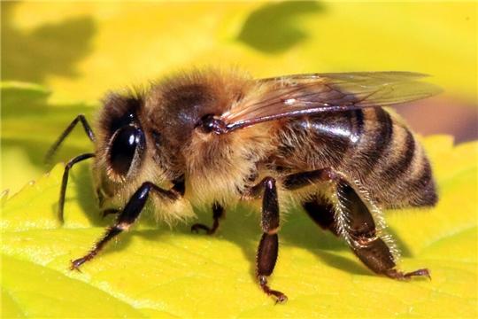 Рекомендации по профилактике заболеваний пчел