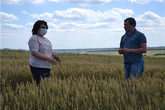 Глава администрации района осмотрела посевы ООО «КиПиАй Агро»