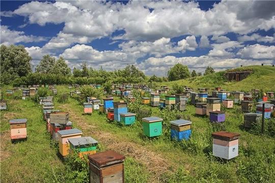 Минсельхоз России разрабатывает меры поддержки пчеловодства