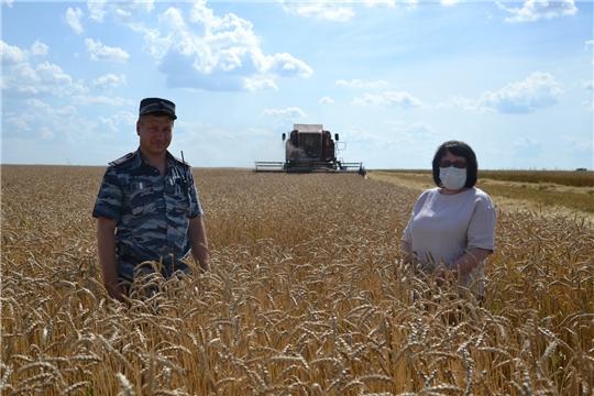 На полях района продолжается горячая пора – уборка урожая