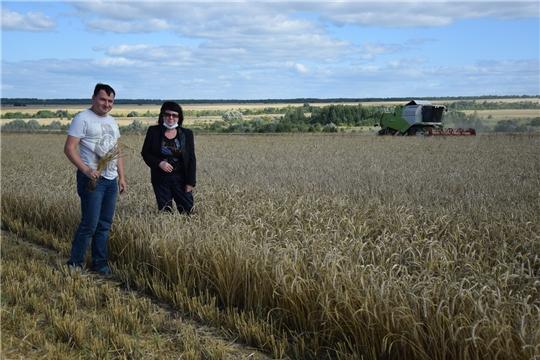 В сельскохозяйственных предприятиях Алатырского района продолжаются уборочные работы