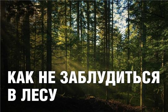 Как не заблудится в лесу