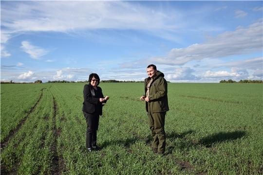 О ходе сельскохозяйственных работ на полях «КиПиАй Агро» Алатырского района