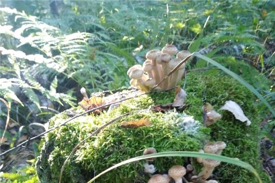 Приглашаем принять участие в фотокроссе «В объективе – грибы»