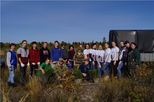 Сажать лес в Алатырском районе помогали волонтеры