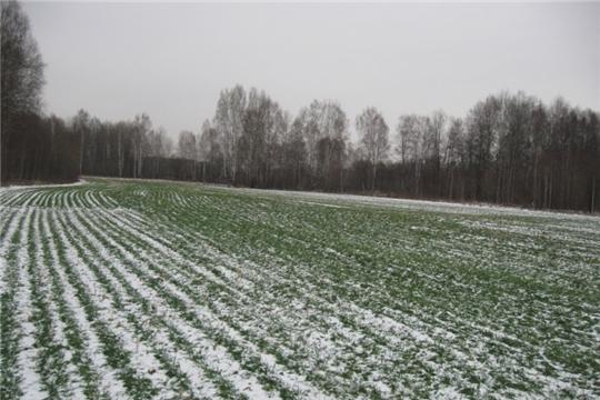 Аграрии обследуют посевы озимых зерновых культур