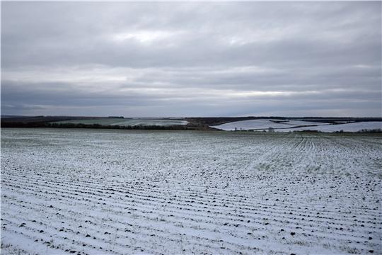 Как перенесут озимые зерновые культуры резкие перепады температуры?