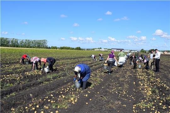 Уборка картофеля на полях КФХ Шрша