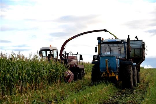 ЗАО «Батыревский» первым в районе вышло на уборку кукурузы