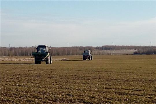 Аграрии Чебоксарского района приступили к подкормке озимых