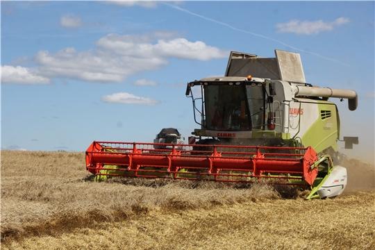 В Чебоксарском районе убрано более 70 % зерновых и зернобобовых культур.