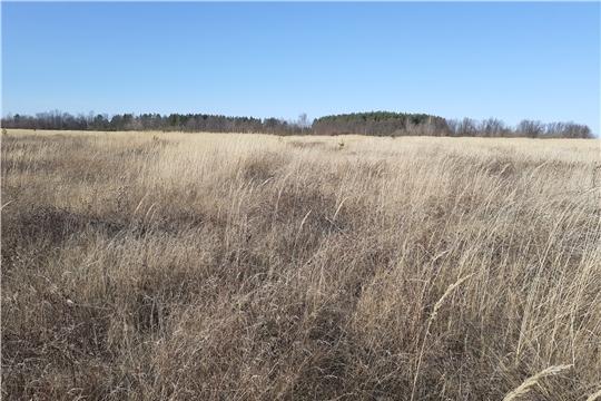 Проведена проверка целевого использования земель сельскохозяйственного назначения в Чебоксарском районе