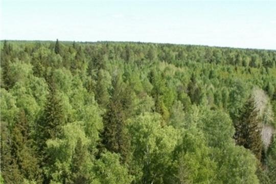 Минэкономразвития Чувашии извещает о размещении проекта отчета об итогах государственной кадастровой оценки земель лесного фонда и земель особо охраняемых территорий и объектов