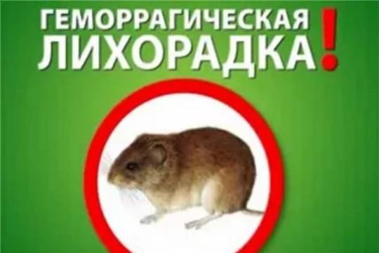 Осторожно! Геморрагическая лихорадка с почечным синдромом (ГЛПС)