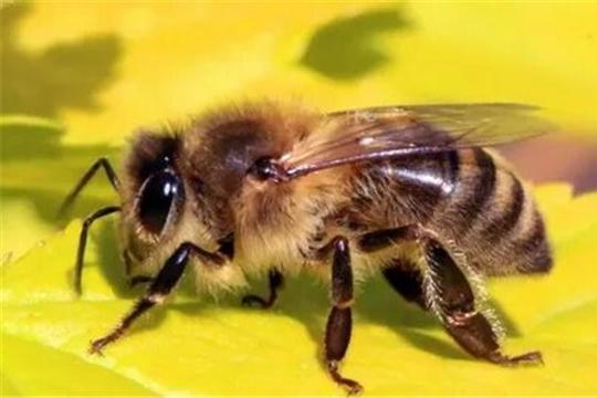 Рекомендации по профилактике заболеваний пчёл