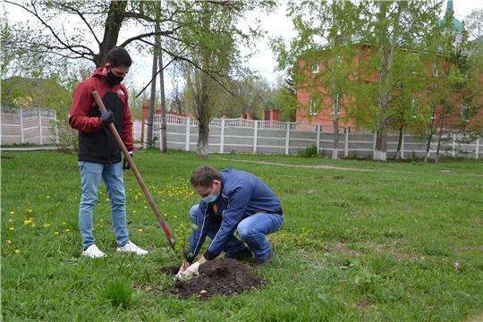 Алатырцы активно участвуют в акции «Сад памяти»