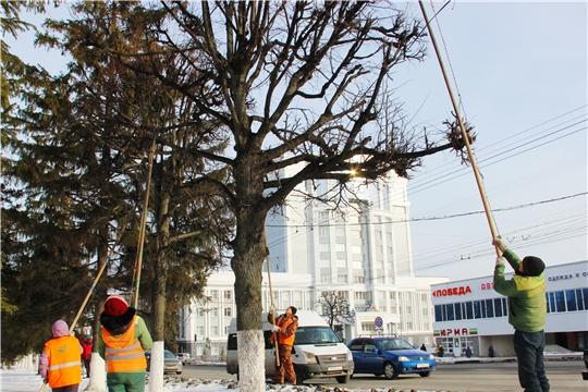 К весне в Чебоксарах завершат формовочную обрезку деревьев