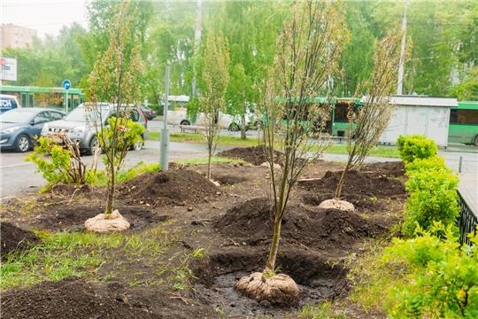 В Чебоксарах весной высадят 302 дерева и 1174 кустарника