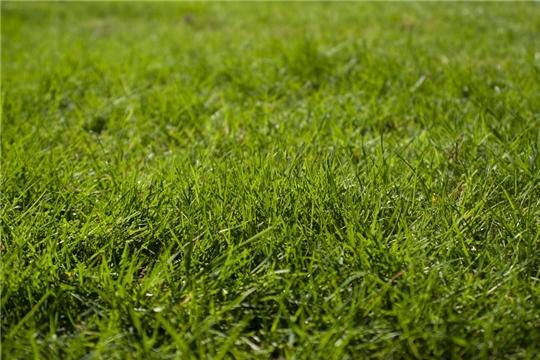 В столице Чувашии организована работа по покосу травы