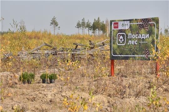 В Заволжье города Чебоксары состоялась Всероссийская акция по посадке деревьев «Сохраним лес»
