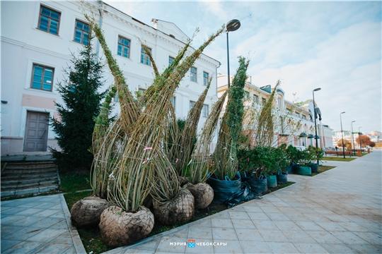 Высадка деревьев началась на Красной площади Чебоксар