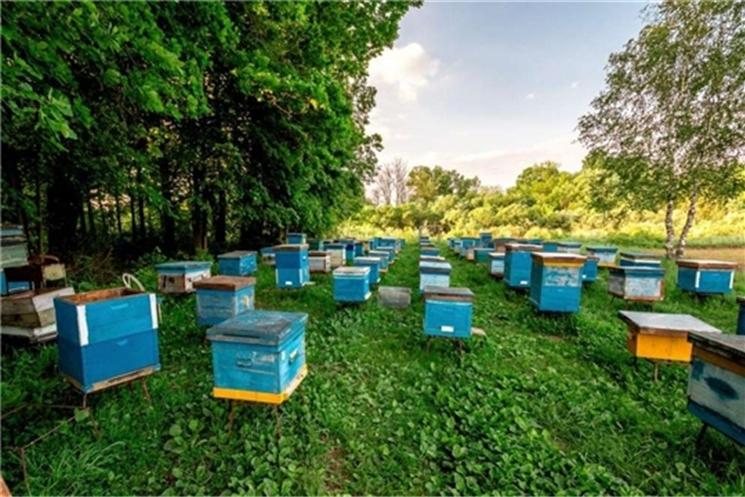 Во всех регионах России должны создаваться пчеловодческие кооперативы