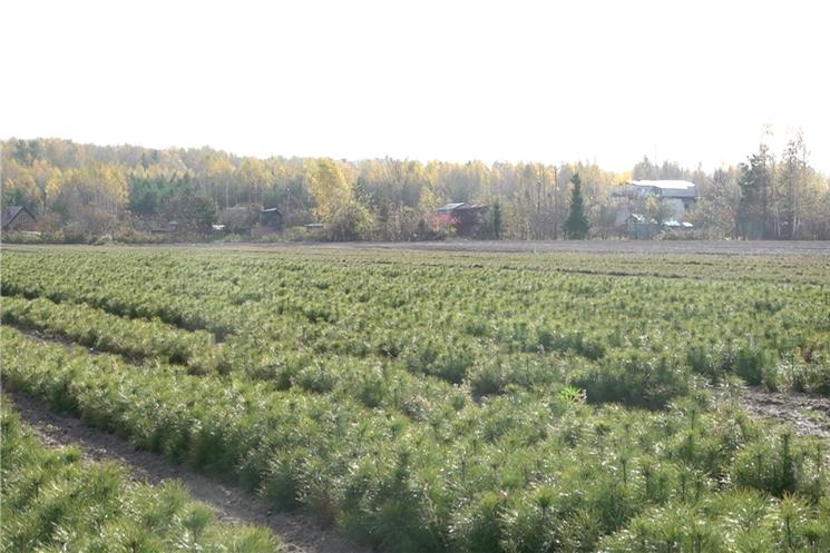 В Чебоксарском лесничестве прошла Всероссийская акция по посадке деревьев.