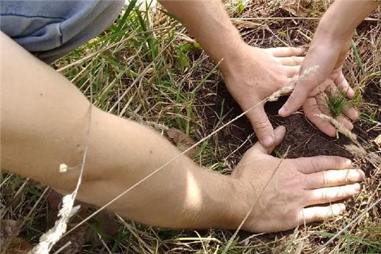 Экологический субботник в рамках Всероссийской акции «Лес Победы»