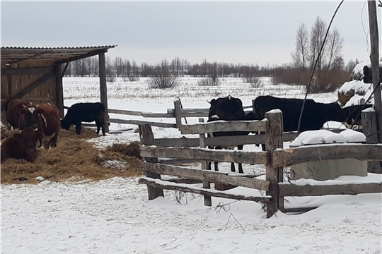 В Ибресинском районе идет проверка фермеров