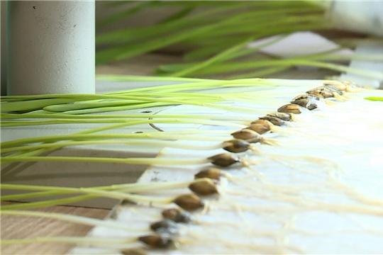 Фитоэкспертиза семян – залог здорового урожая