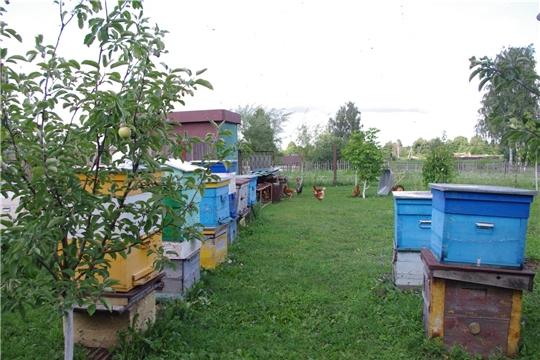 Россельхозцентр предупреждает об обеспечении безопасности пасек при применении пестицидов