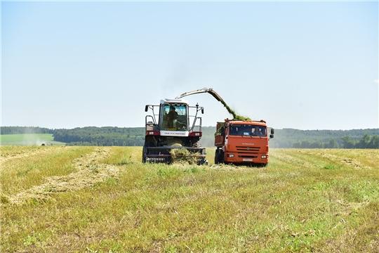 В сельхозпредприятиях Ибресинского района ведется заготовка кормов
