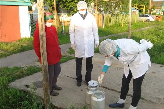 Качество сырого молока в ЛПХ Ибресинского района на контроле ветеринарных специалистов
