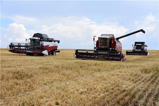 В Ибресинском районе уборка озимых зерновых культур началась в двух агрофирмах «Пионер» и «Дружба»