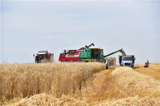 Еще в трех хозяйствах Ибресинского района приступили к уборке зерновых культур