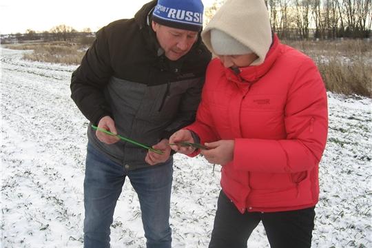 Аграрии Ибресинского района обследуют посевы озимых зерновых культур