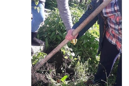 Весенняя посадка деревьев в рамках Международной акции «Сад памяти»
