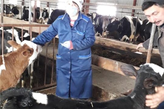 Ветеринарные специалисты Кошноруйского ветеринарного пункта провели вакцинацию против бешенства в КФХ Егорова В.Н.