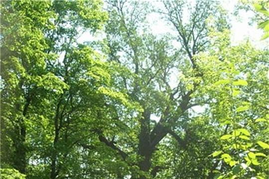 Программе «Деревья – памятники живой Природы» исполняется 10 лет