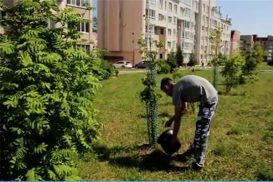 В Чебоксарах организовано гарантийное обслуживание молодых саженцев