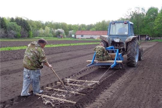 Мариинско-Посадское лесничество провело весенний посев семян хвойных пород в лесном питомнике