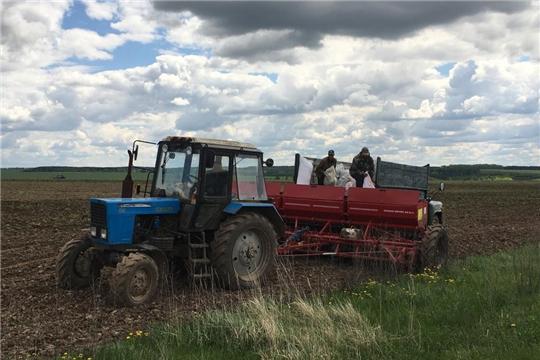 В сельхозорганизациях и крестьянских фермерских хозяйствах Мариинско-Посадского района весенне-полевые работы идут к завершению